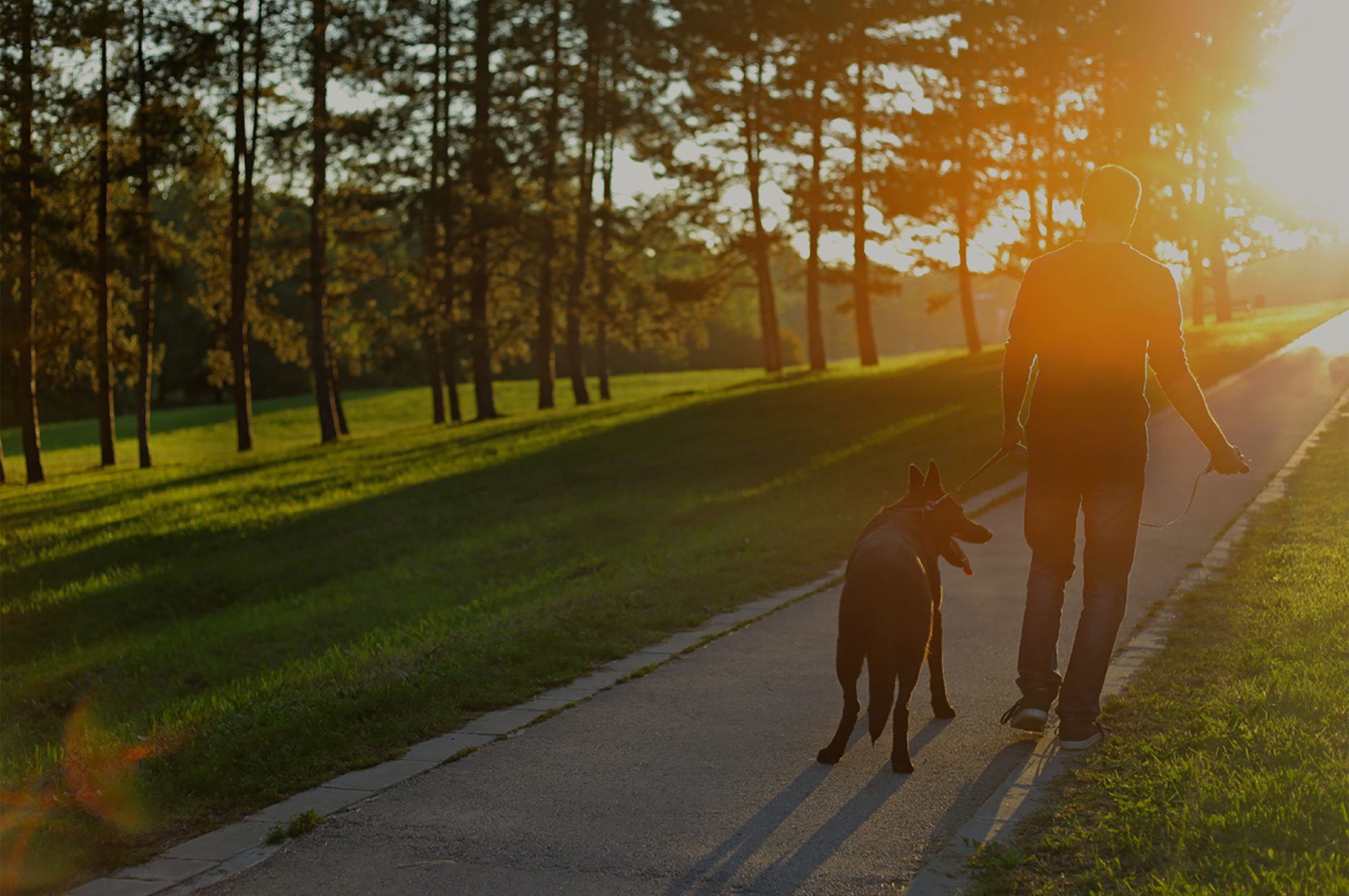 walking-dog-at-sunset